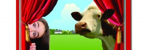 Lights! Curtains! Cows!